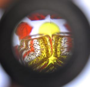 Gustav Klimt Kaleidoscope - Random Designs Thumbnail 4