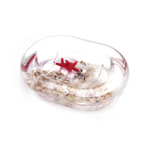 Seashore & Starfish Soap Dish - Clear Liquid in Transparent Acrylic