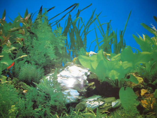 Water Grass 15 5 Tall Aquarium Fish Tank Background