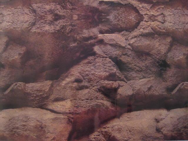 Rock cave fish tank 15 background aquarium tall vivarium for Fish tank caves