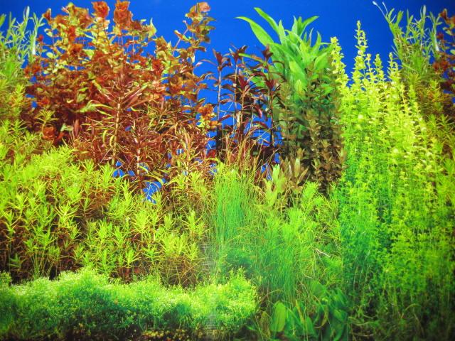 SEA PLANT AQUARIUM FISH TANK BACKGROUND 12