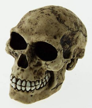 Collectable Novelty Human Skull Money Box / Piggy Bank - 11cm Preview