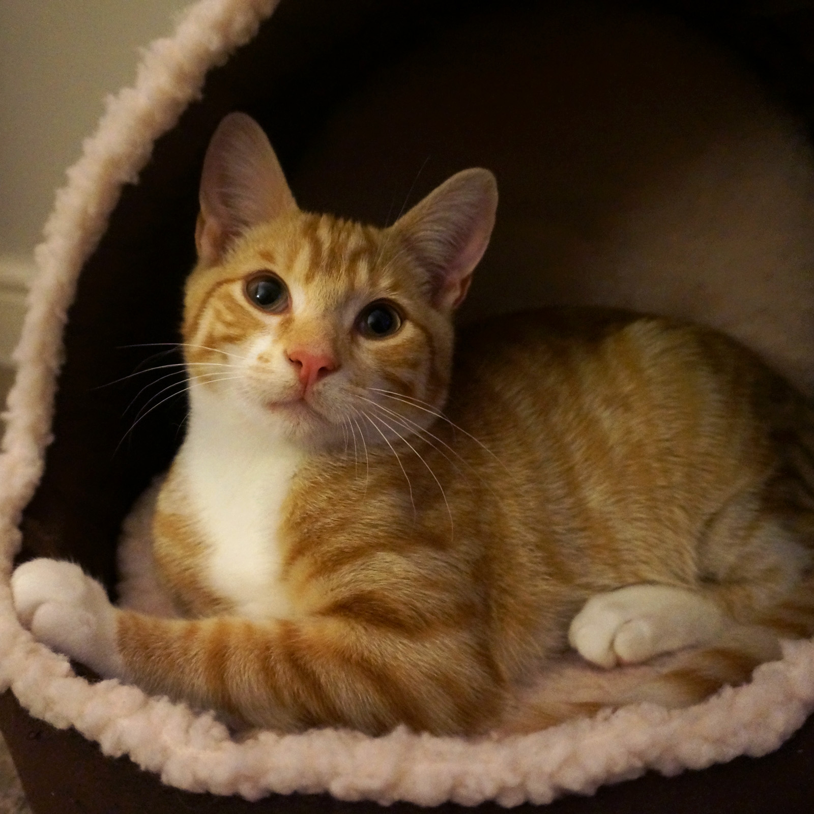 Fluffy Soft Cat Bed Puppy Bed Kitten Bed Igloo Cozy House