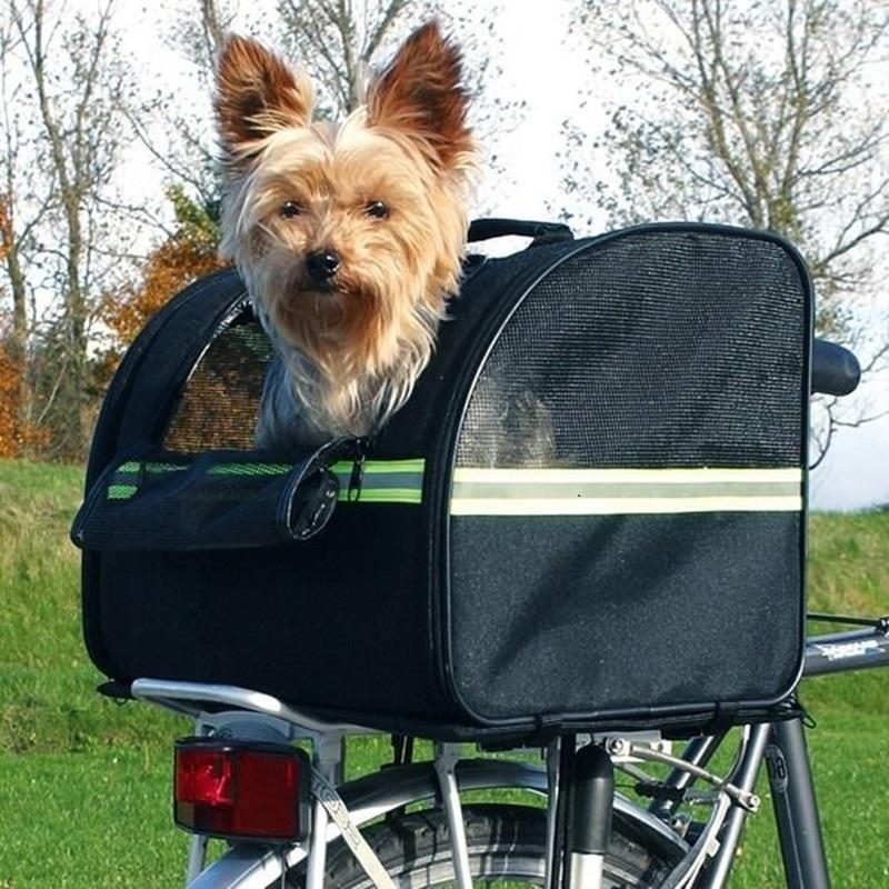 Кот и собака на велосипедах