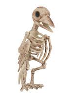 Skeleton Raven Bird Prop