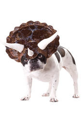 View Item Triceratops Dog Costume