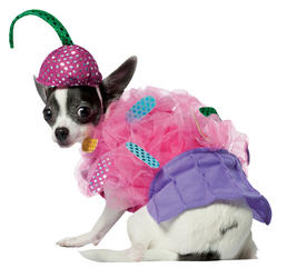 View Item Cupcake Dog Costume