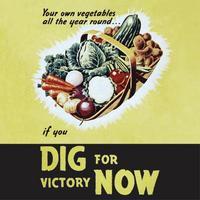 Dig For Victory Veg Basket Single Coaster