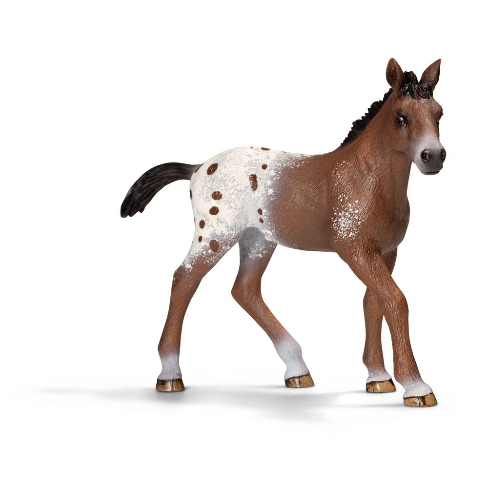 images How to Learn About the Appaloosa Horse