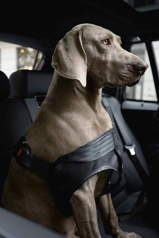 ремень для собак от bmw