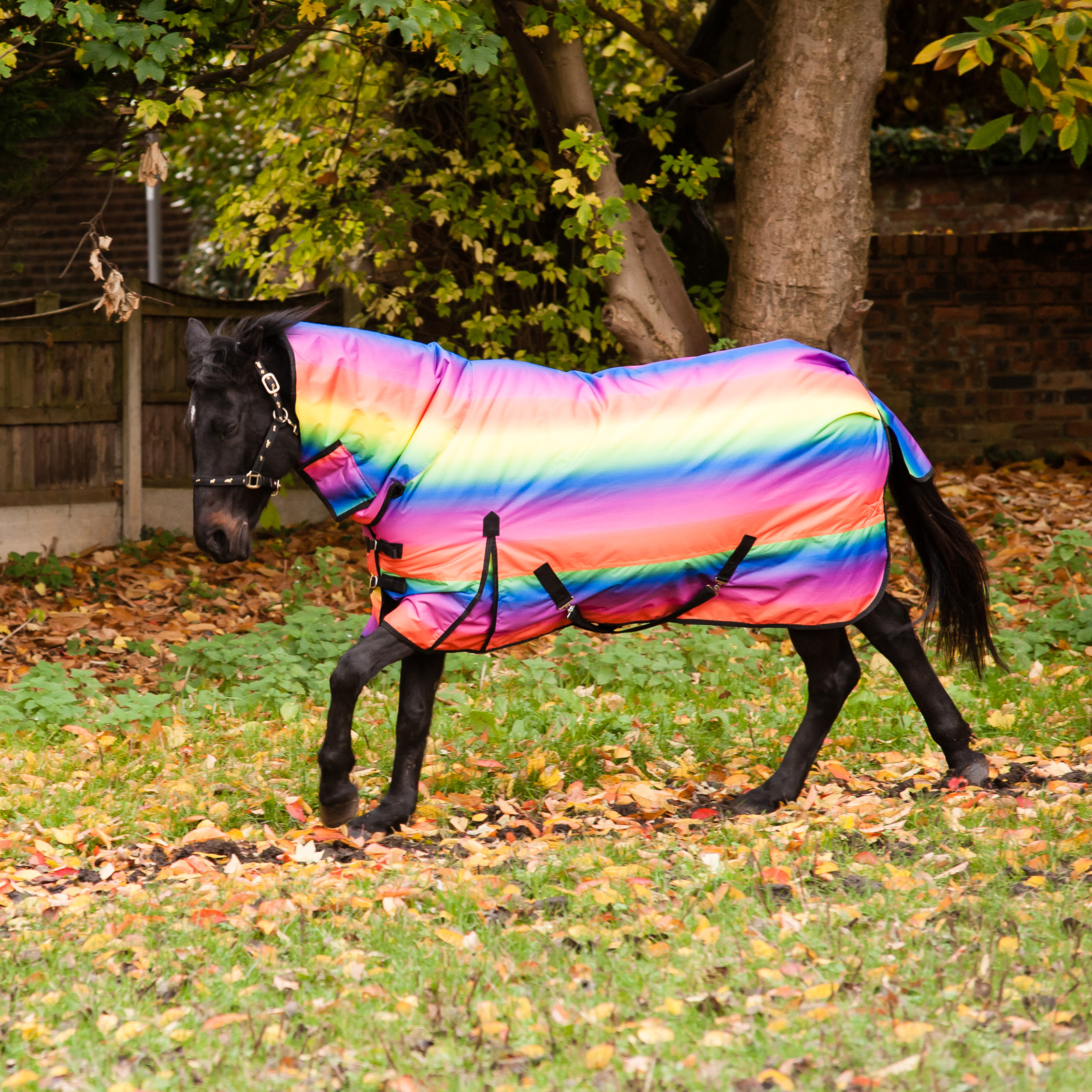 Pony Horse Heavyweight Combo Neck Turnout Rug Waterproof Outdoor Rain 4 0 7