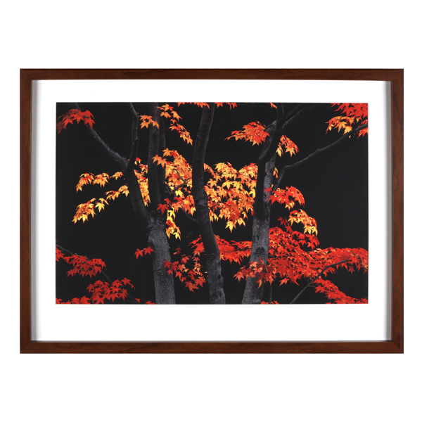 Autumn Leaves On Tree 85Cm X 65Cm Enlarged Preview