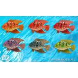 GOLDFISH SET 2 70X110mm 1 of 6 colours Decoration for Party