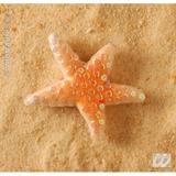 M SEASTAR MEDIUM 12cm Costume for Fish Sea Creature Animal Fancy Dress Outfit Medium