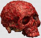 Prop Bloody Scab Resin Skull Prosthetic Halloween Pirate Fancy Dress Accessory