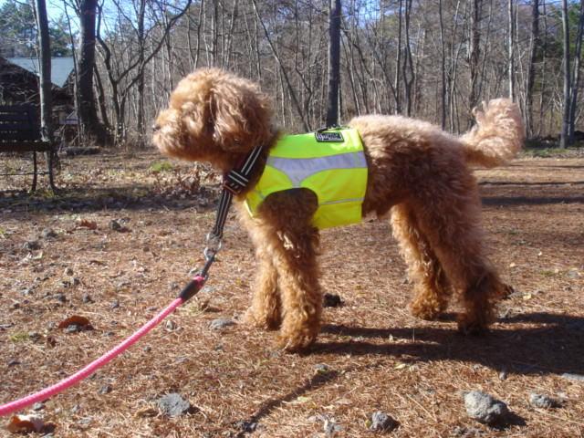 Hurtta Lifeguard Polar Vest High Visibility Dog Jacket Pick Colour & Size