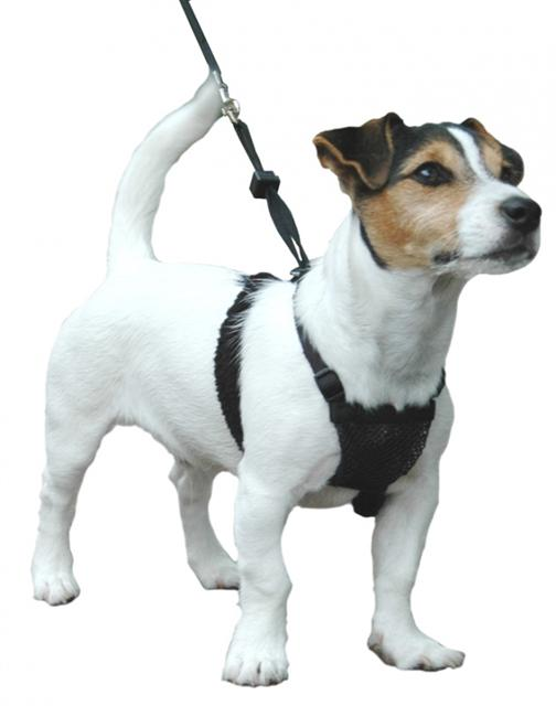 from Gael sporn non pull harness