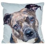 Visage Cushion Staffie