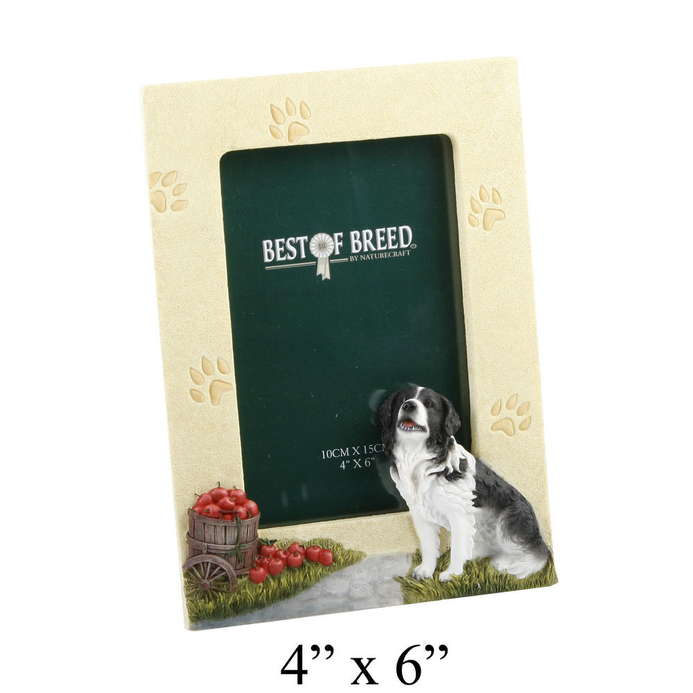 """Best Of Breed Border Collie Photo Picture Frame 4"""" X 6"""""""