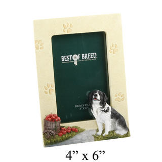 """Best Of Breed Border Collie Photo Picture Frame 4"""" X 6"""" Thumbnail 1"""