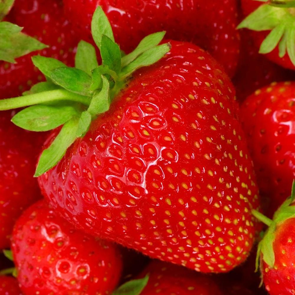 3 Strawberry Cambridge Favourite Fragaria Perennial