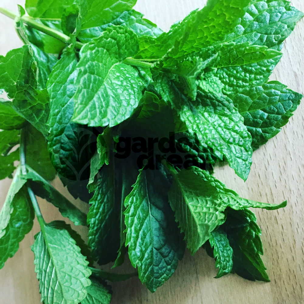 Kitchen Herb Gardens That Will Make Cooking Wonderful: Garden Kitchen Herb For Cooking