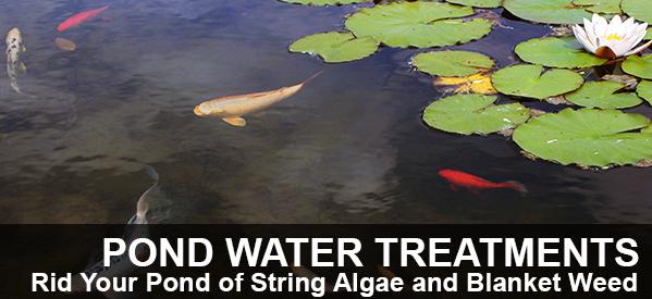 Blanketweed & String Algae Treatments