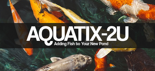 How Long Should I Wait Before Adding Fish to my New Pond? Common Questions Answered by Aquatix-2u