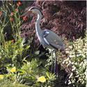 Decoy Heron - Pisces