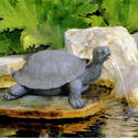 BERMUDA JUNGLE PALS GALAPAGOS TORTOISE POND WATER SPITTER GARDEN FEATURE ANIMAL