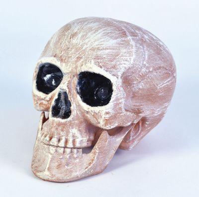 Skull Head Realistic Thumbnail 1