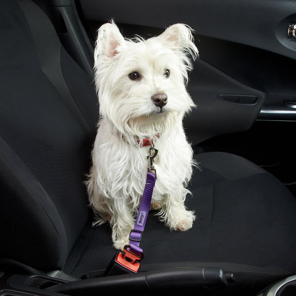 Seat Belt Real Life on Dog Car Harness Seat Belt