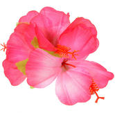 Hawaiian Hula Luau Theme Fancy Dress Accessory Hibiscus Flower Hair Clip Thumbnail 1