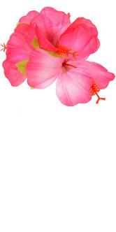 Hawaiian Hula Luau Theme Fancy Dress Accessory Hibiscus Flower Hair Clip Thumbnail 2