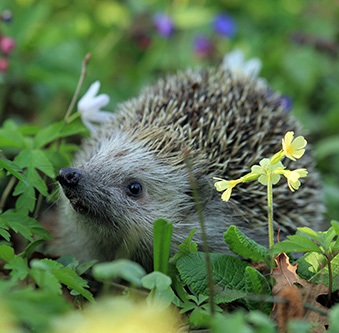 10 Easy Ways To Encourage & Welcome Wildlife In To Your Garden