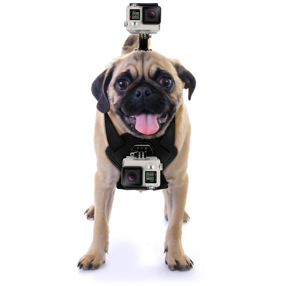 Best Gopro Mount For Dog
