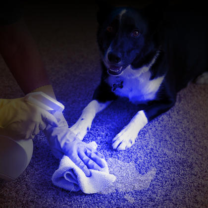 CampTeck 51 LED UV Torch 395nm Ultra Violet Flashlight Blacklight Pet Dogs Cats Urine & Stains Detector Thumbnail 3