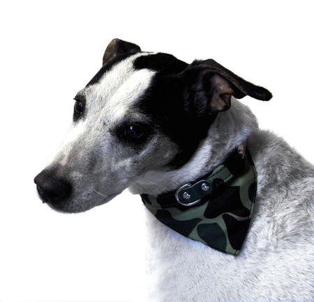 Camo Khaki  Dog Collar 41cm / 16""