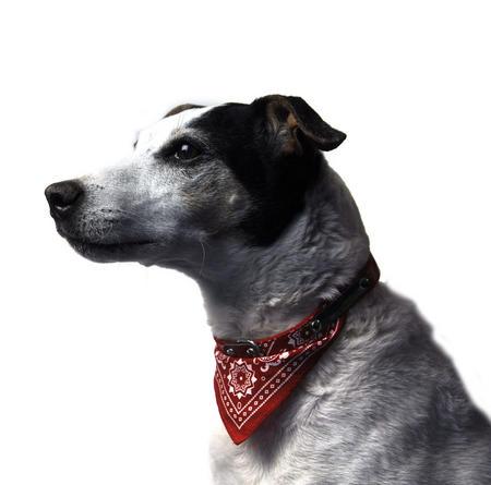 """Red Bandana Dog Collar 65cm / 25"""""""