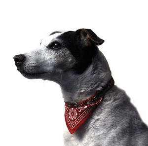 Red Bandana Dog Collar 65cm / 25""