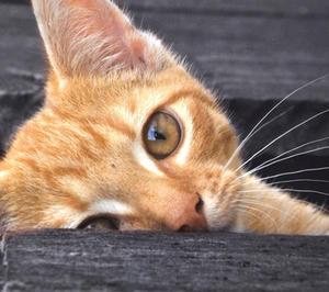 "Catseye Placemat 17"" X 11"" Thumbnail 3"