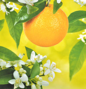 "Citrus Fruit Chopping Board - Melamine 34 cm / 8.5"" X 13"" Thumbnail 2"