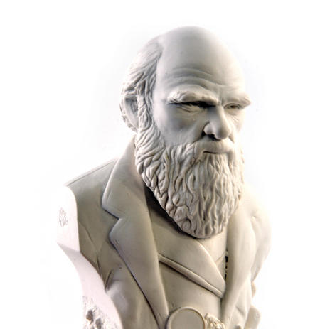 Charles Darwin Statuette - Famous Faces Collection Plaster Bust
