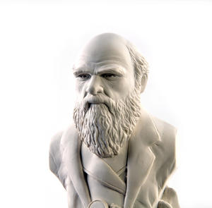 Charles Darwin Statuette - Famous Faces Collection Plaster Bust Thumbnail 2