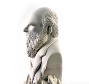 Charles Darwin Statuette - Famous Faces Collection Plaster Bust Thumbnail 3