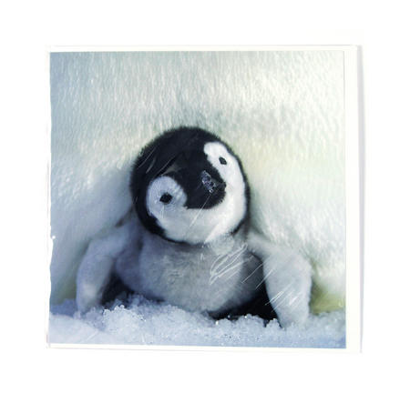 Snuggle By Thorsten Milse Greeting Card