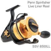 Penn Spinfisher SSV 8500 Live Liner Spinning Fishing Reel | 5 SS Bearings | 1259880