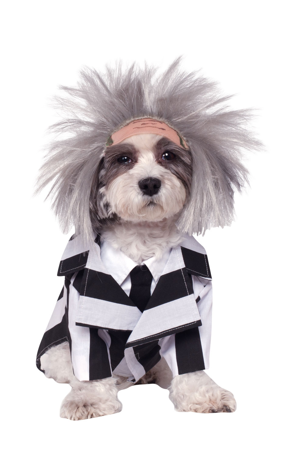 Beetlejuice Fancy Dress Costume Outfit Dog Halloween Pet Animal S To XL