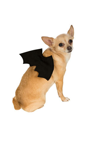 Black Vampire Bat Wings Halloween Fancy Dress Costume Outfit Dog Pet S To L