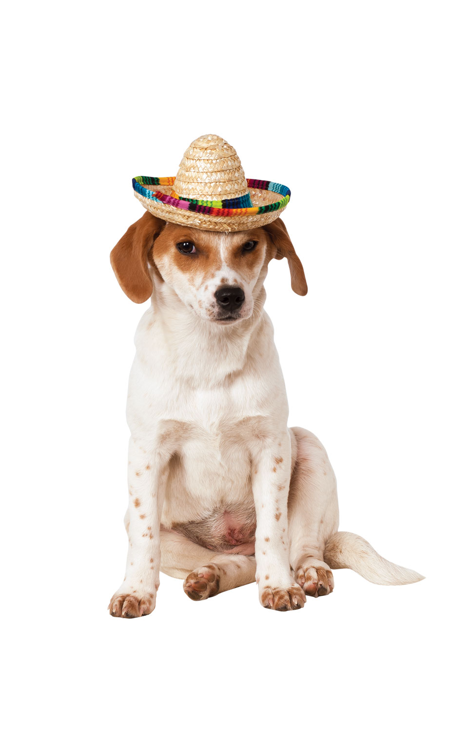 Mexican Rainbow Sombrero Hat Fancy Dress Costume Outfit Dog Pet Animal S To L